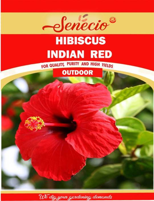 Senecio Hibiscus Mixed Variety Colorful Garden Seed Price In India