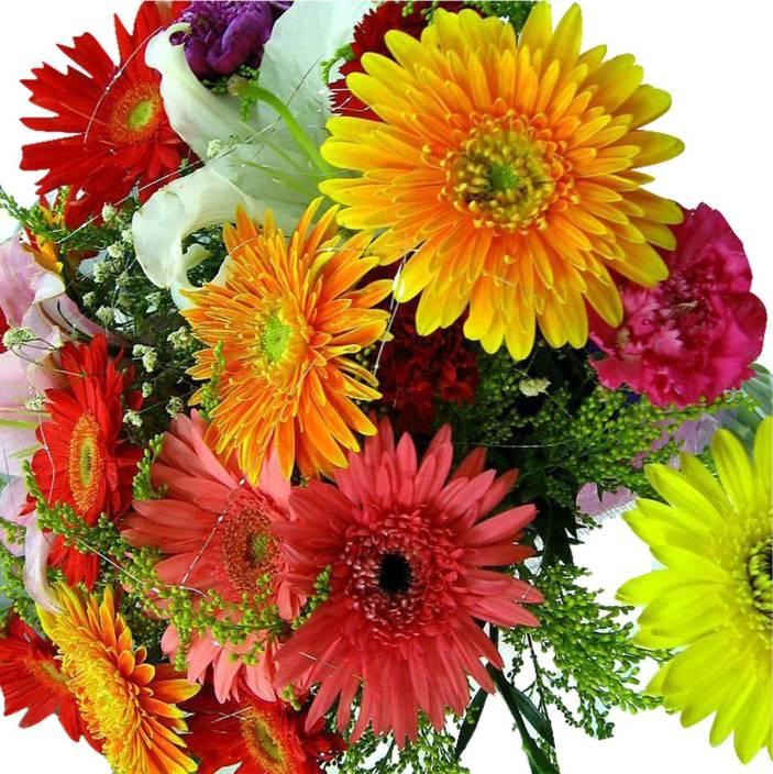 Futaba Hybrid Gerbera Daisy Mix Flower Seeds-100Pcs Seed