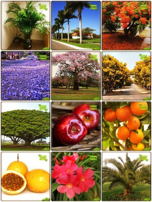 Ohhsome Plant Seeds Combo Flower Tree Fruit Apple Orange