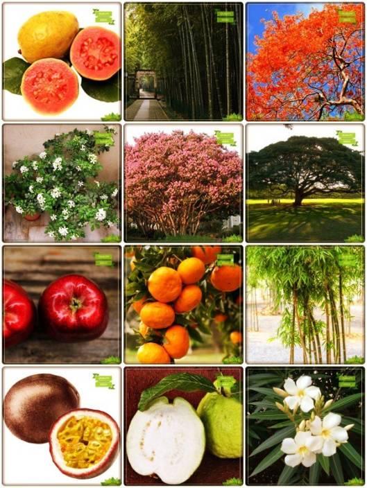 OhhSome Seeds Combo Fruit & Fruit : Apple, Orange, Passion Fruit