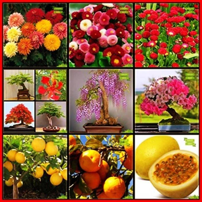 Ohhsome Fruit Seeds Combo Flower Seeds Fruit Lemon Seeds