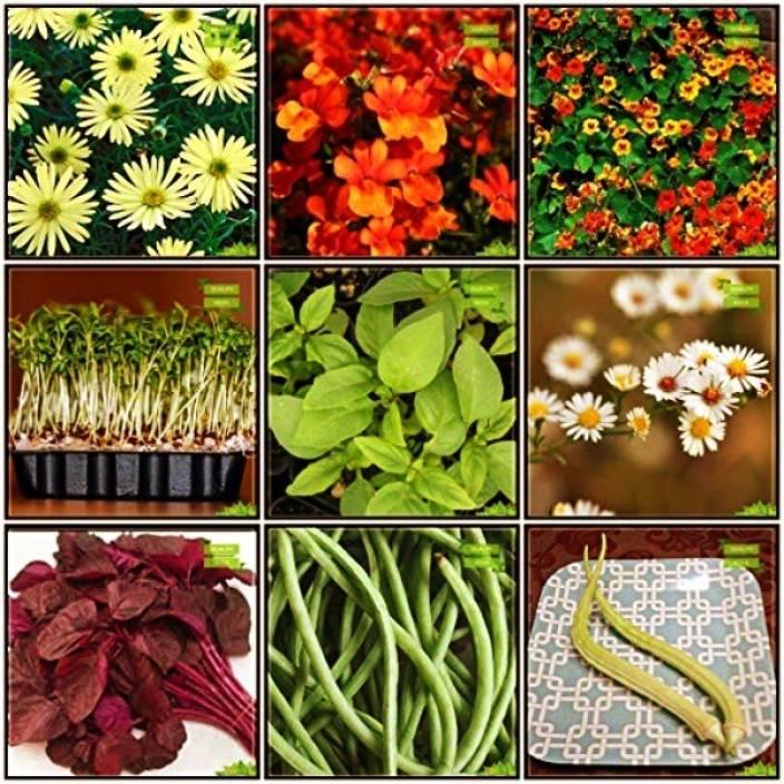 OhhSome Garden Flower Seeds All Season Combo Herb Seeds & Flower