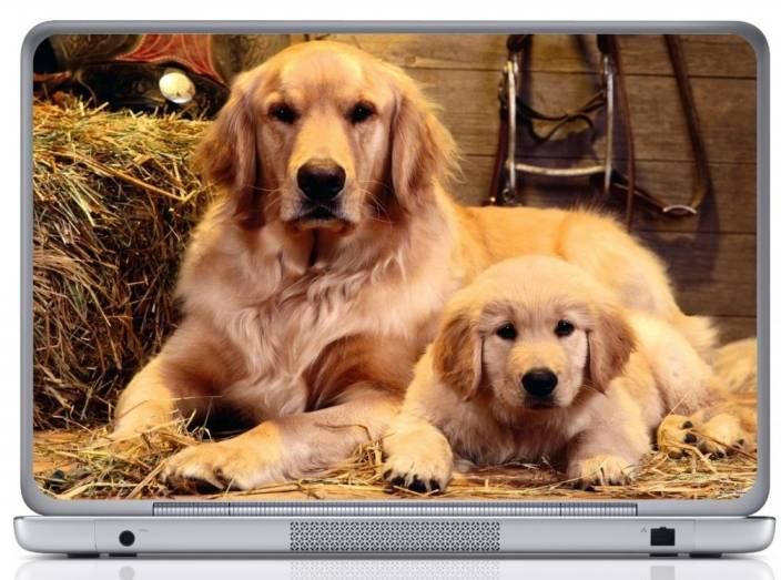 Wall Design Golden Retriever Dog And Puppy Vinyl Laptop Decal 15 6