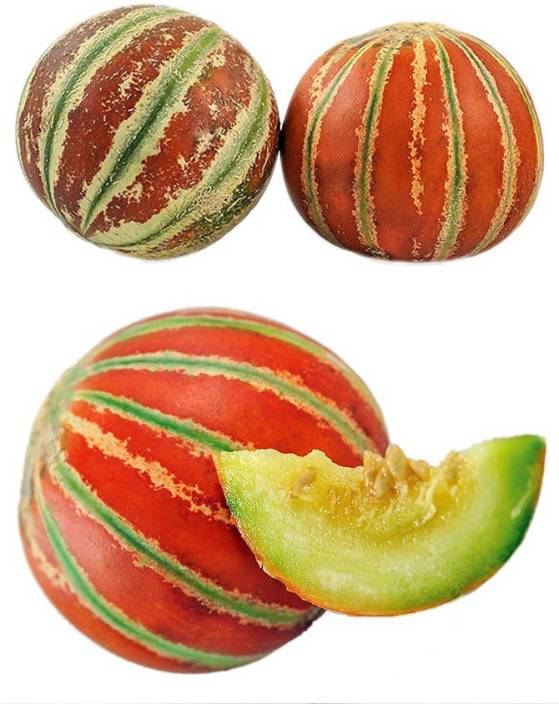 real seed musk melon kajri f1 hybrid imported seed price in india