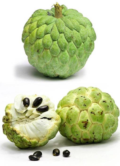 Pictures Of Custard Apple Fruits