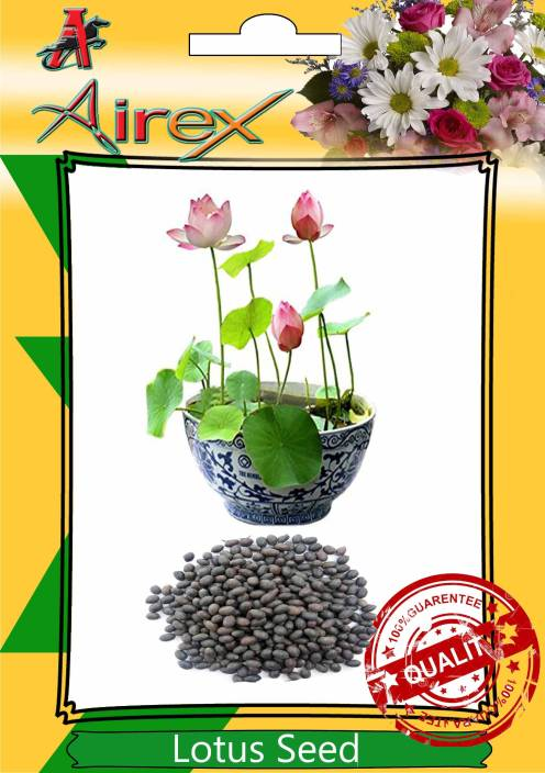 Airex Sacred Lotus Indian Lotus Seed Price In India Buy Airex