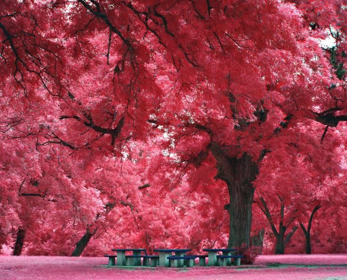 Wonder Image Pink Autumn Fall Leaves Art Print Canvas 12 Inch X 15