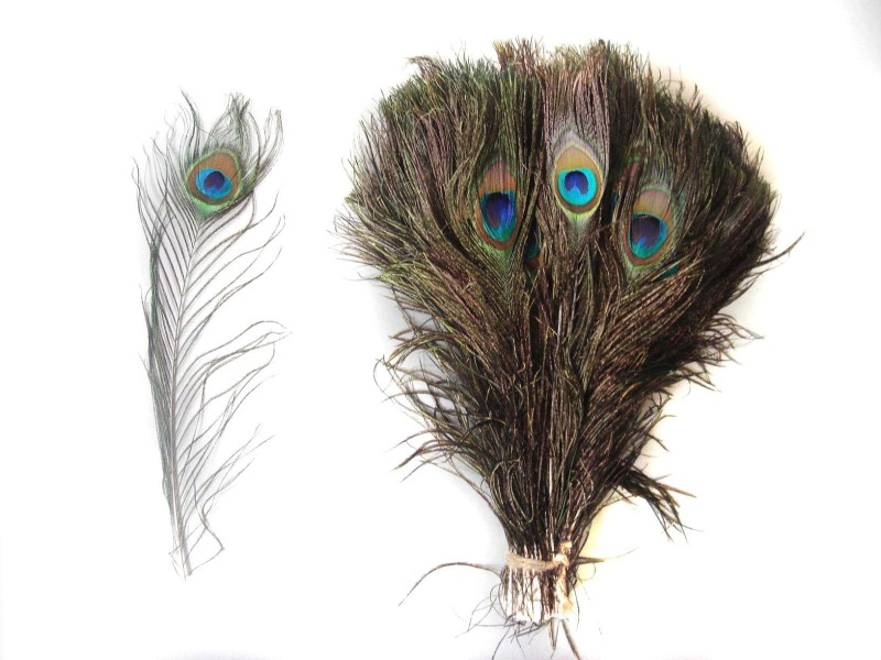 Jetlink Pack of 10 Decorative Feathers(40-50 cm Peacock Feather)