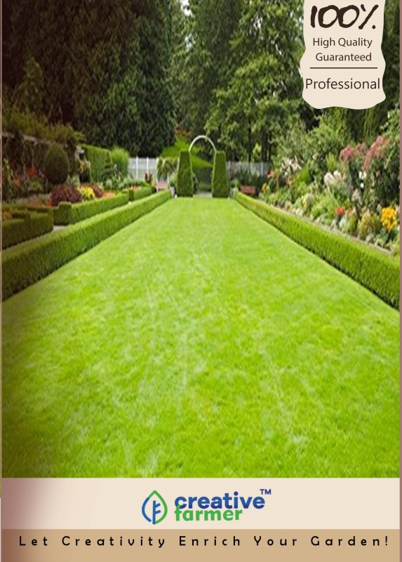 Creative Farmer Lawn Grass Seeds Seed(3000 per packet)
