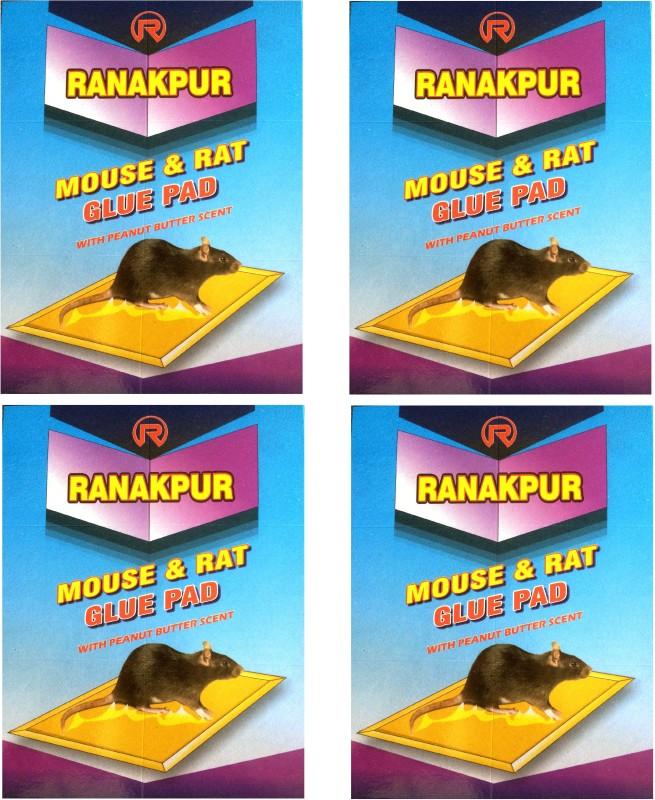 Ranakpur Mouse & Rat Trap with Peanut Butter Scent (Rat Catcher without Position) (4 Pcs) Live Trap