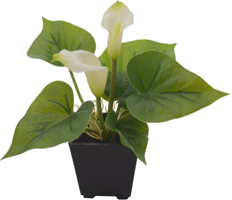 Fourwalls Artificial Calla Lily Plant In Melamine Vase (18 Cm, Green And...