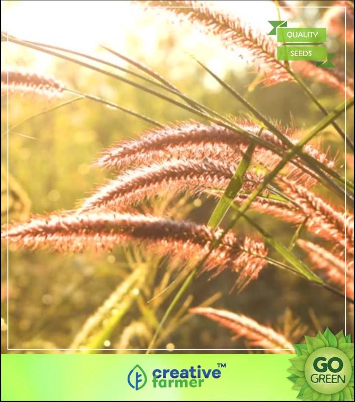 Creative Farmer Grass Seeds : Dinanath Grass Grass Seeds For Cattle Seed(20 per packet)