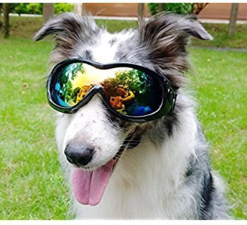 Birds' Park Dog Goggles- Sunglass