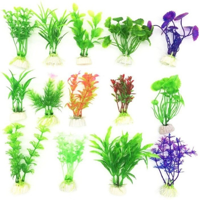 Elif Imported Aquarium Grass Plant Seed(50 per packet)
