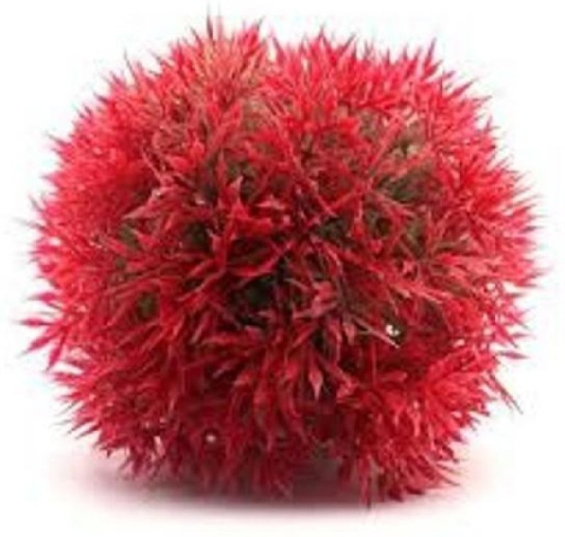 Priyathams Imported Red Aquarium Grass Seed(60 per packet)