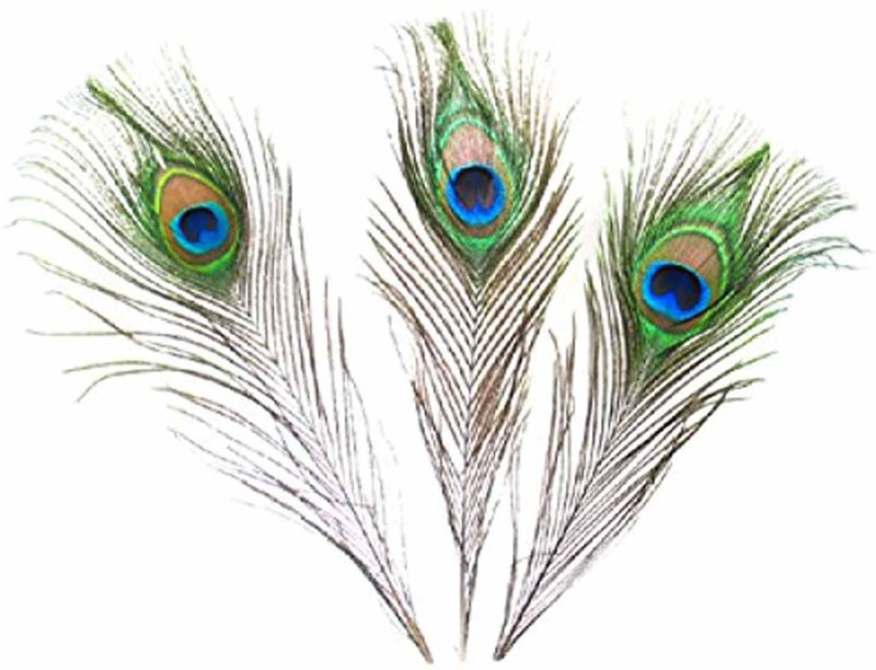 AB WORLD CLASS Pack of 3 Decorative Feathers(STANDARD Peacock Feather)