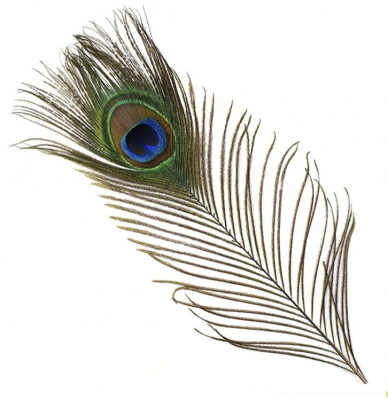 AB WORLD CLASS Pack of 5 Decorative Feathers(12 INCHES Peacock Feather)