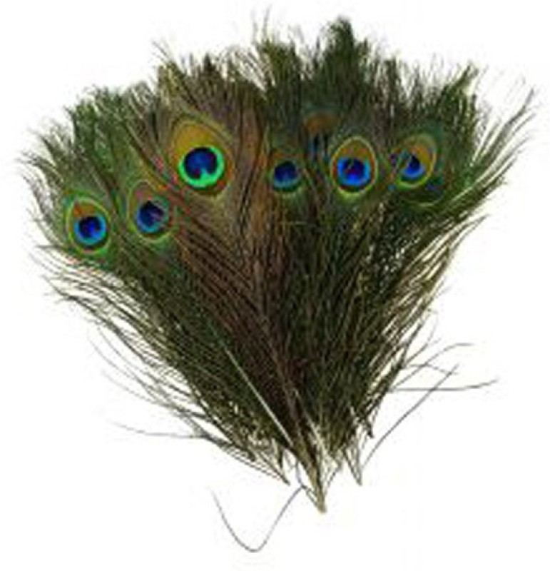AB WORLD CLASS Pack of 10 Decorative Feathers(12 INCHES Peacock Feather)