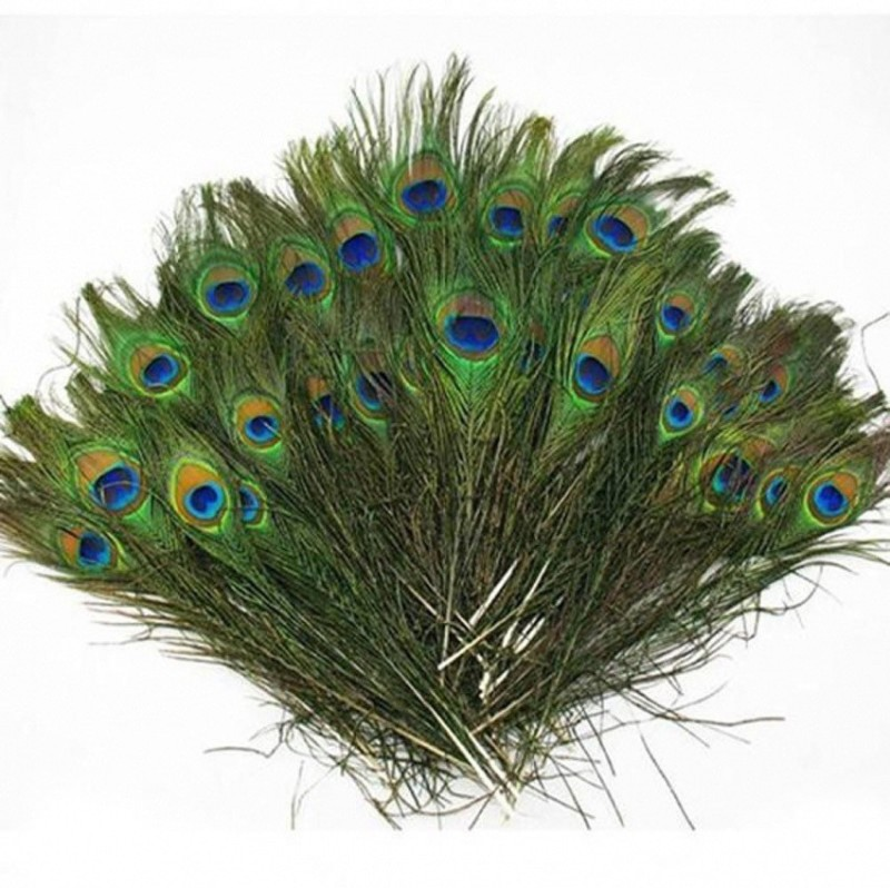 AB WORLD CLASS Pack of 20 Decorative Feathers(20 Peacock Feather)
