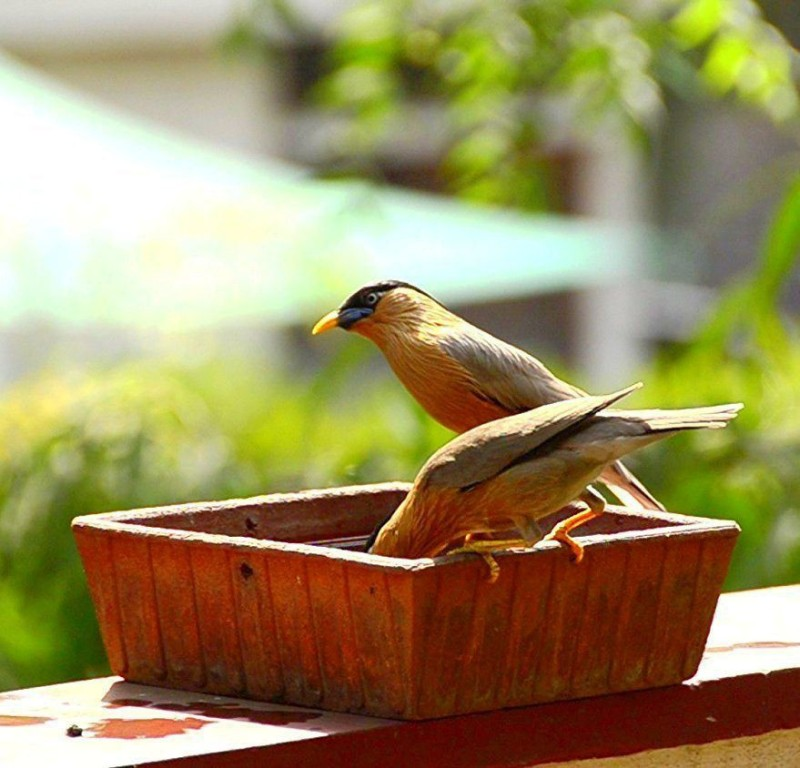 Satyam Craft SCE0002003 Regular Bird Bath(Terracotta)