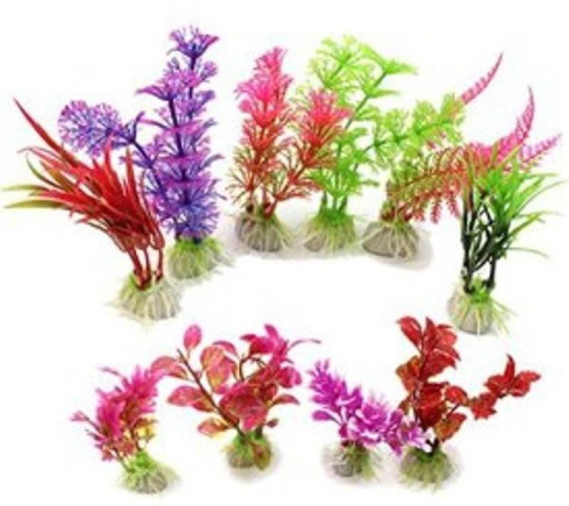 PABBA aquarium grass Seed(50 per packet)