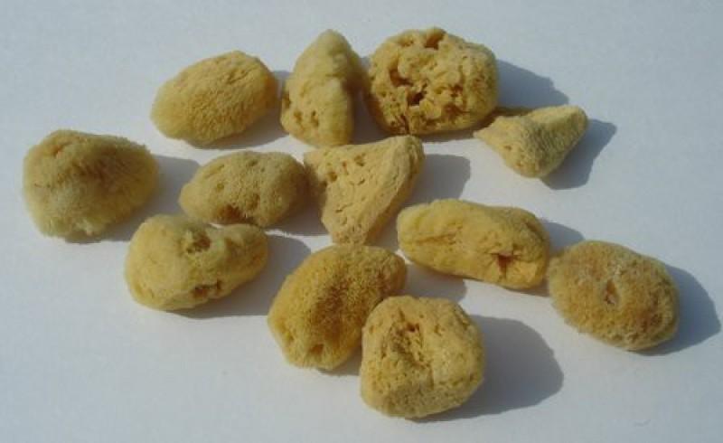 Sponge Producers Naturals Natural Sea Silk Sponges