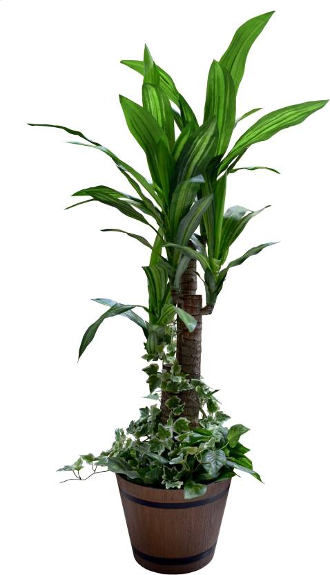 fourwalls 4 feet tall decorative dracaena floor with 3 branches