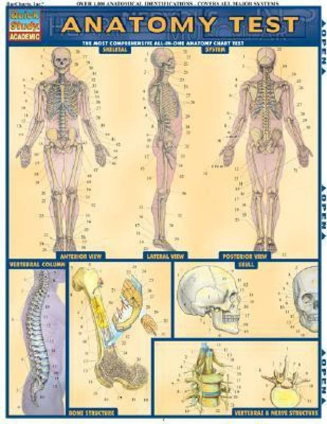 Anatomy Test Laminate Reference Chart The Most Comprehensive All In