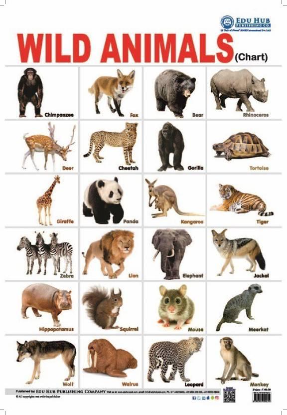 wild animals chart buy wild animals chart by nidhi kundra at low