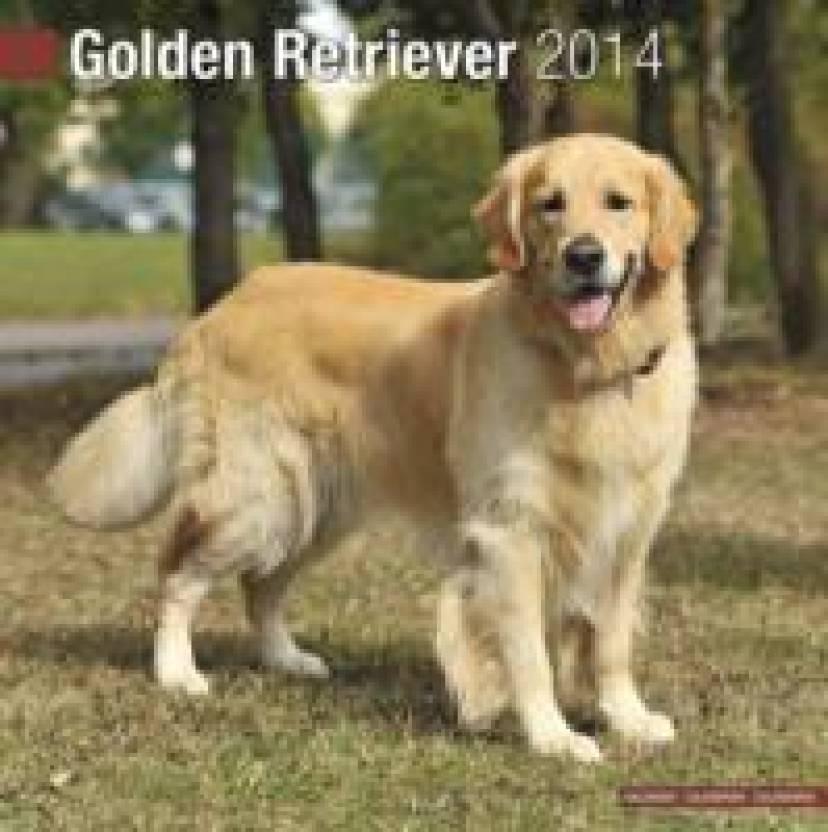 Golden Retriever 2014 Buy Golden Retriever 2014 Online At Best