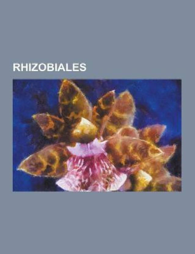 Rhizobiales: Agrobacterium Tumefaciens, Rhizobia