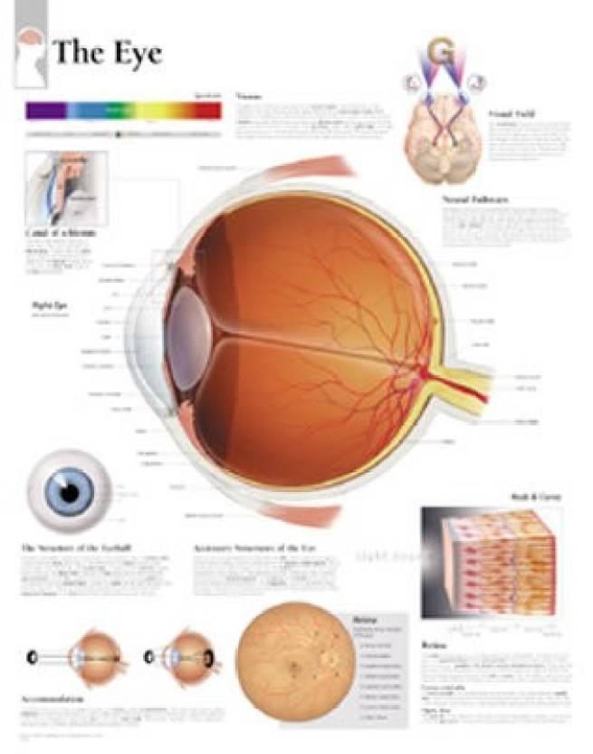 The Eye Chart Laminated Wall Chart Buy The Eye Chart Laminated