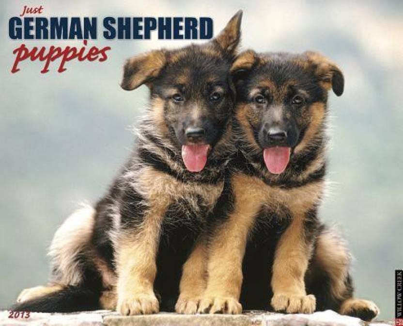 German Shepherd Puppies: Buy German Shepherd Puppies by Willowcreek