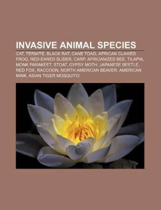Invasive Animal Species Cat Termite Black Rat Cane Toad African