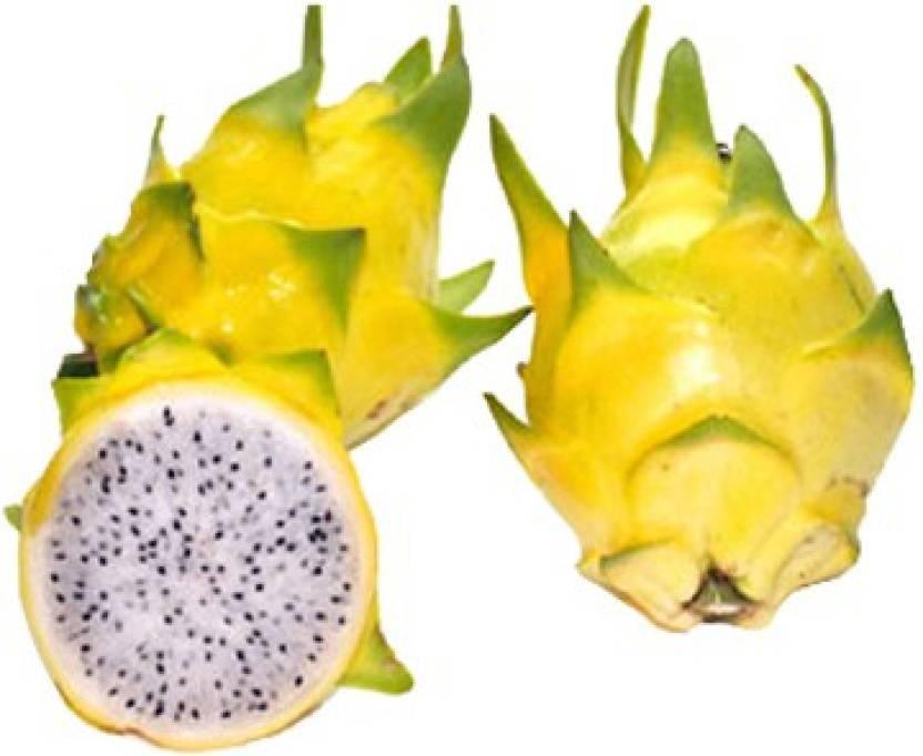 futaba yellow dragon fruit pitaya organic seed price in india buy