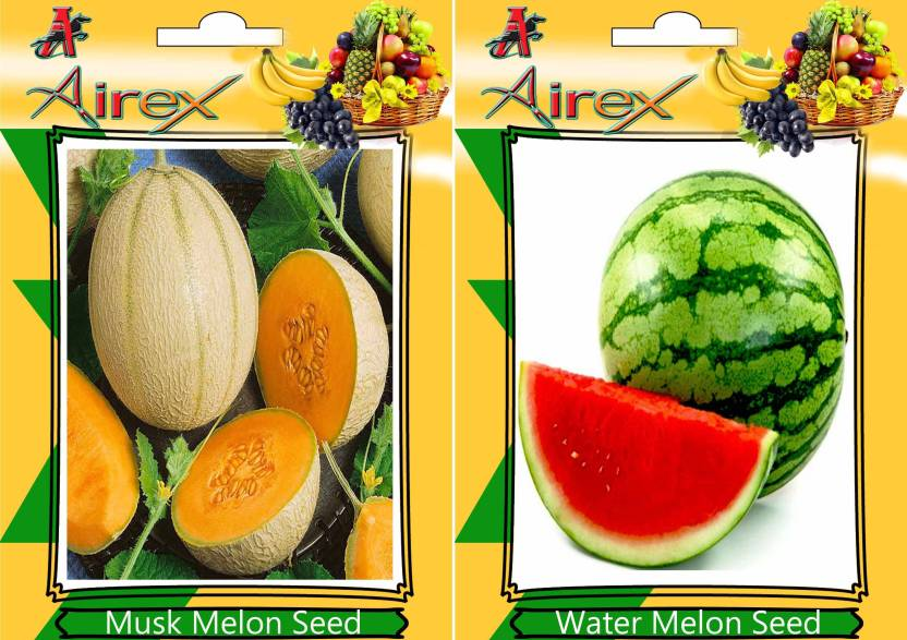 airex musk melon water melon seed price in india buy airex musk