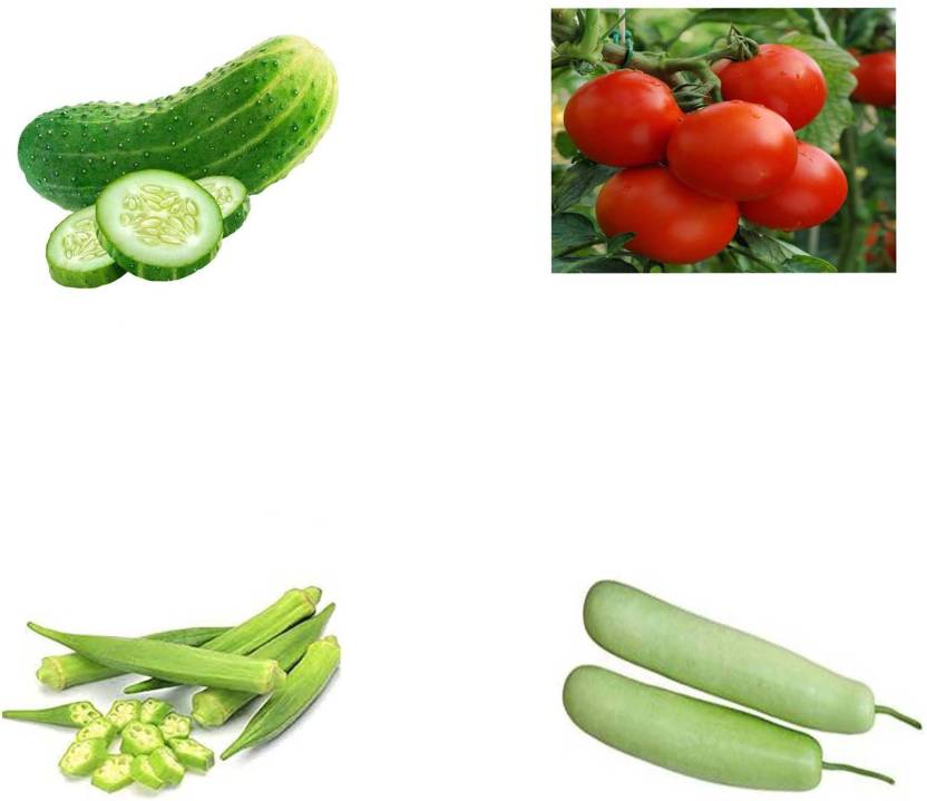Hug Me CUCUMBER OR KHIRA, TOMATO, LADIES FINGER OR BHINDI