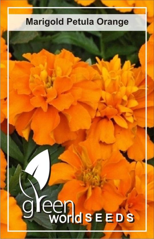 Green World French Orange Marigold Seed Price In India Buy Green