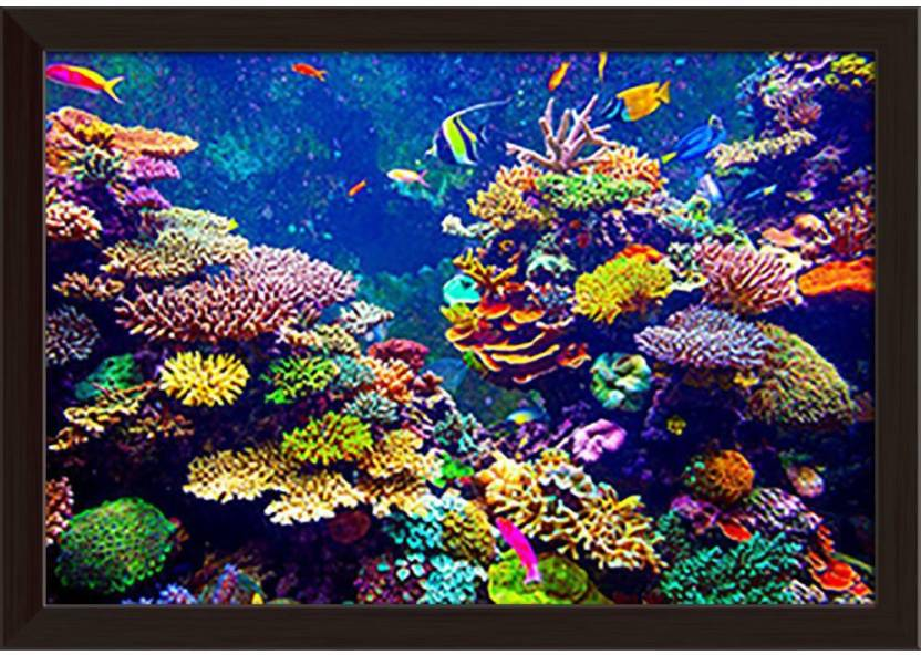 79dfd1c1 ArtzFolio Coral Reef And Tropical Fish In Sunlight Framed Wall Art Painting  Print Canvas 12.0 inch x 17.0 inch Painting Price in India - Buy ArtzFolio  Coral ...