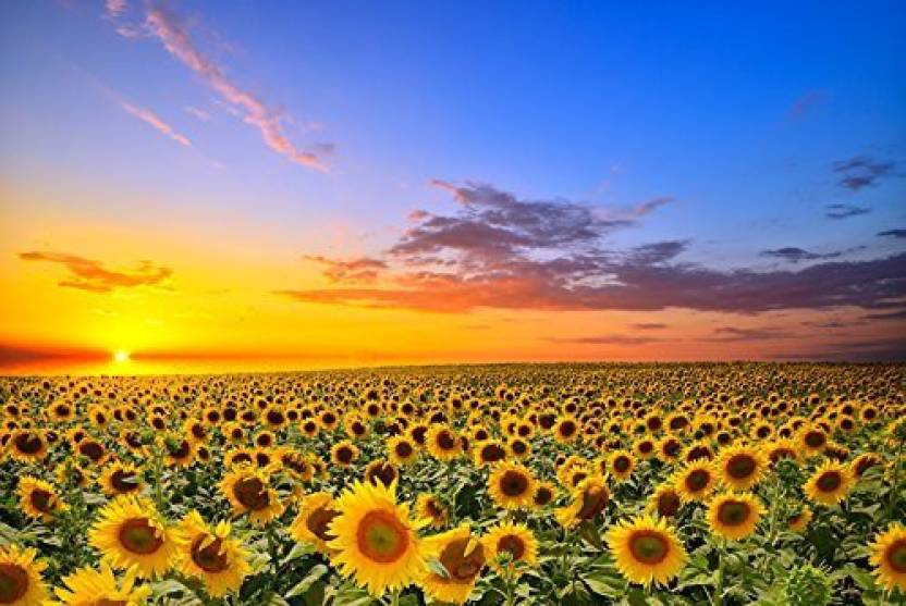 45b19e280 VICTORY-Jigsaw Intellectiv Games Photomosaic Jigsaw Puzzle Wooden In A Box  29 519 6 Famous Paintings Sunflower Flowers Field (1000 Pieces)