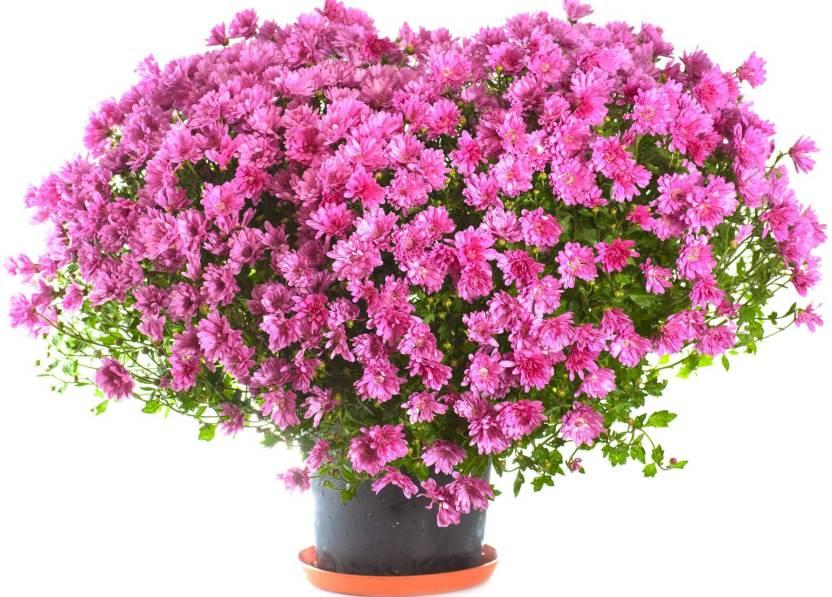 FLOWER POT POSTER HD Wallpaper Background Fine Art Paper DECORATION Print