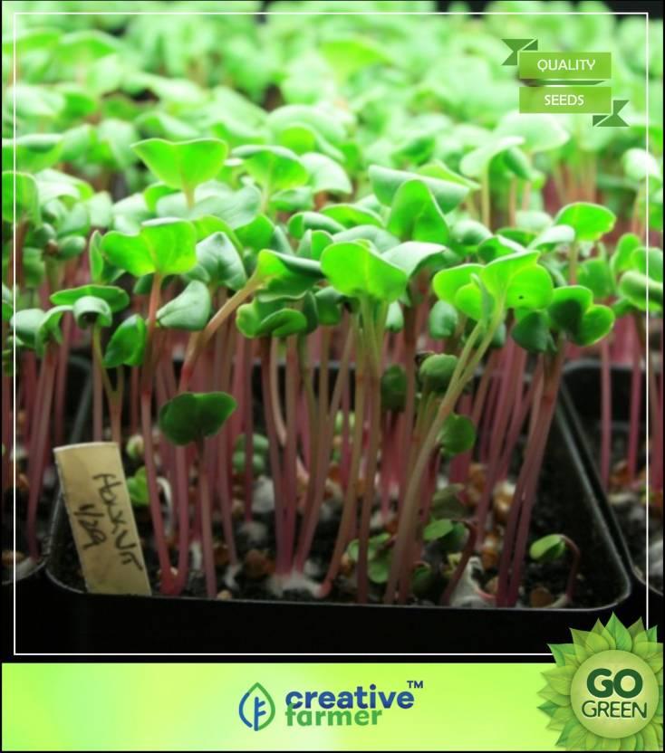 Creative Farmer Herb Seeds For Kitchen Garden Cress Seeds