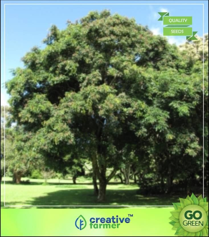 Creative Farmer Tree Plant For Corner Of House Red Sandalwood Coral