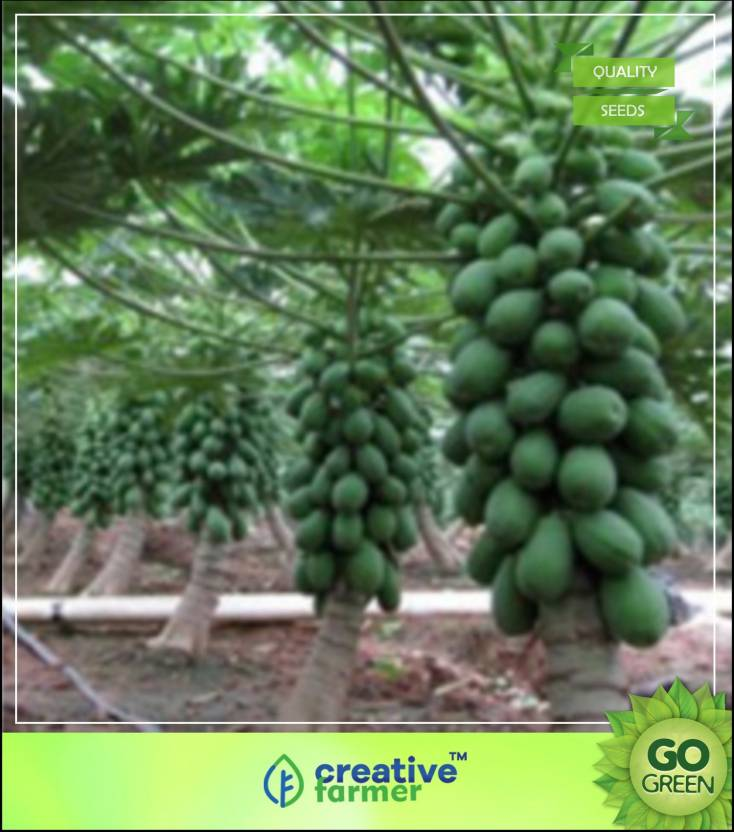 Papaya Tree Images