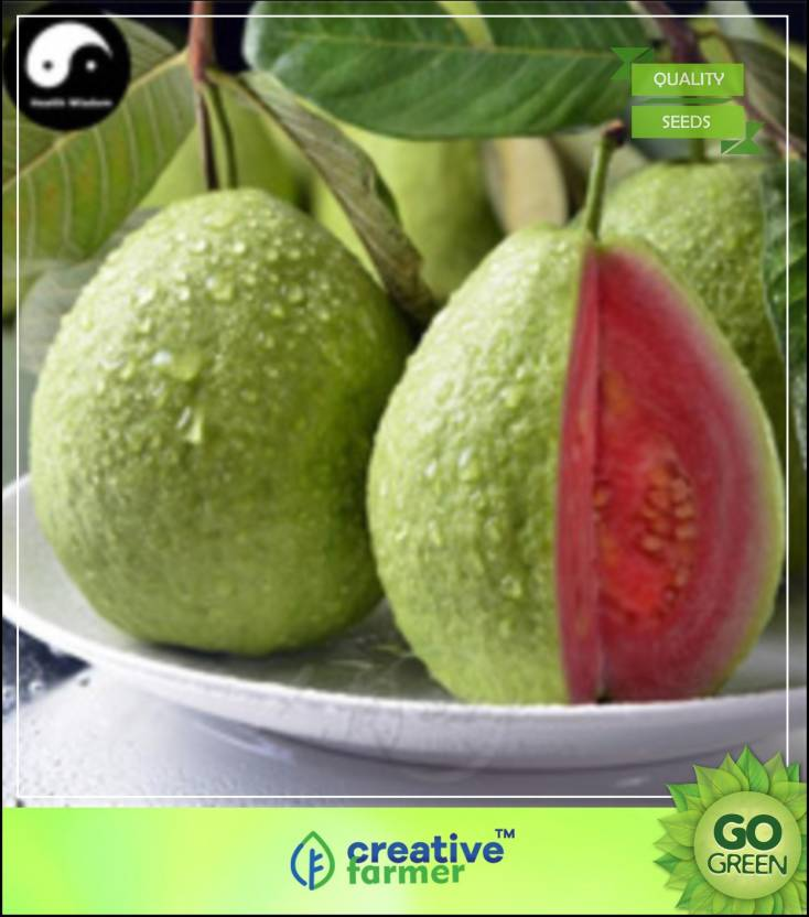 Creative Farmer Fruit Seeds : Giant Guava Fruit Dwarf