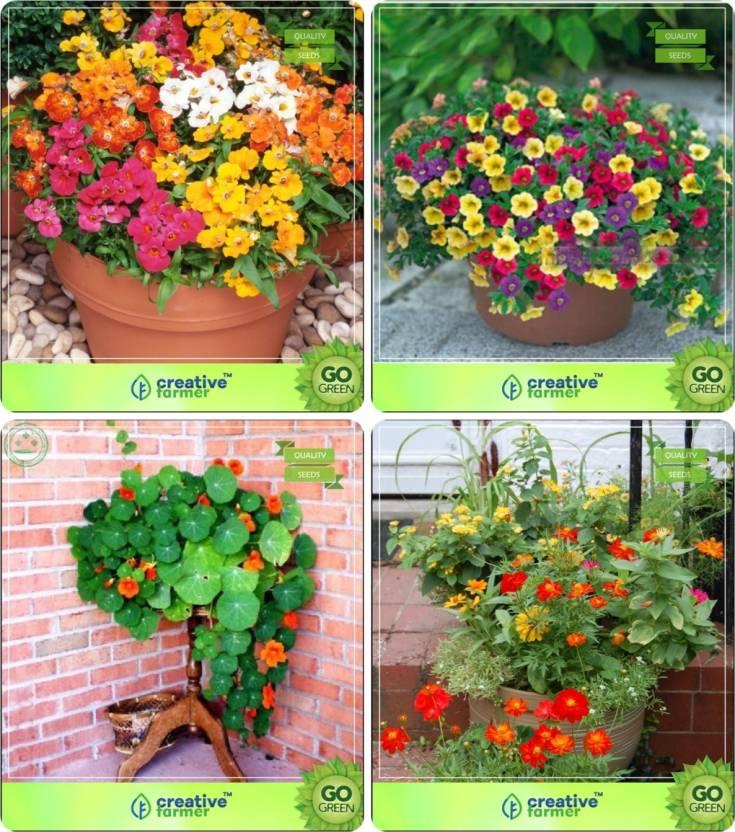 Creative Farmer Flower Seeds Perennial Flower Seeds Combo Nemesia