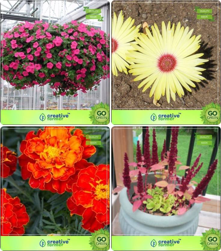 Creative Farmer Flower Seeds Home Depot Plant Combo Petunia Rose Burf