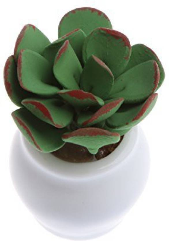 Dovewill 1 12 1 2inch Height Dollhouse Mini Clay Plants Succulent