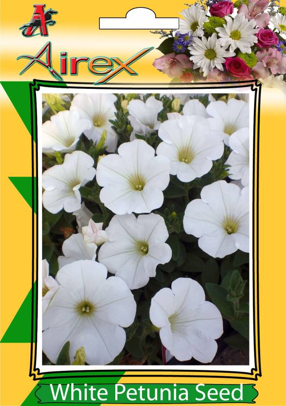 Airex White Petunia Flower Seeds Pack Of 30 Seeds 1 Per Packet