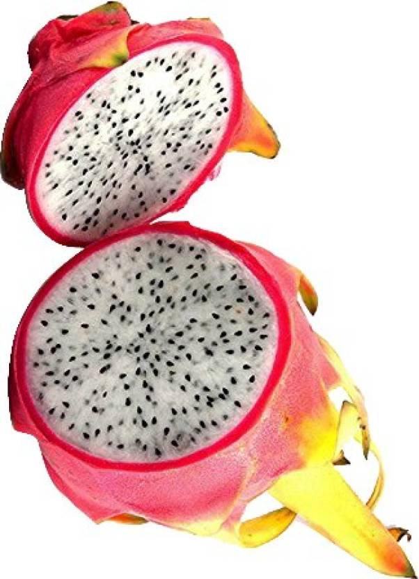 nema pitaya white dragon fruit seed price in india buy nema pitaya